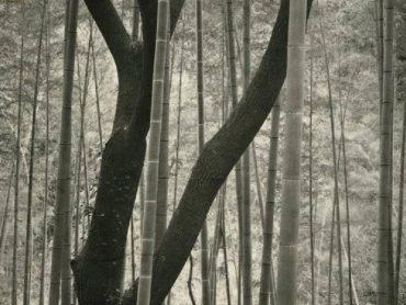 Encore – Nobuyuki Kobayashi – Portrait of Nature, Myriads of Gods