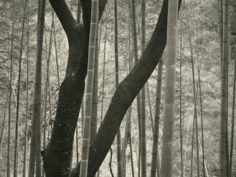 (En cours) Encore – Nobuyuki Kobayashi – Portrait of Nature, Myriads of Gods