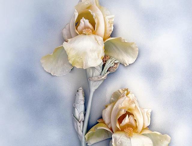 Traces de Fleur パリの華跡